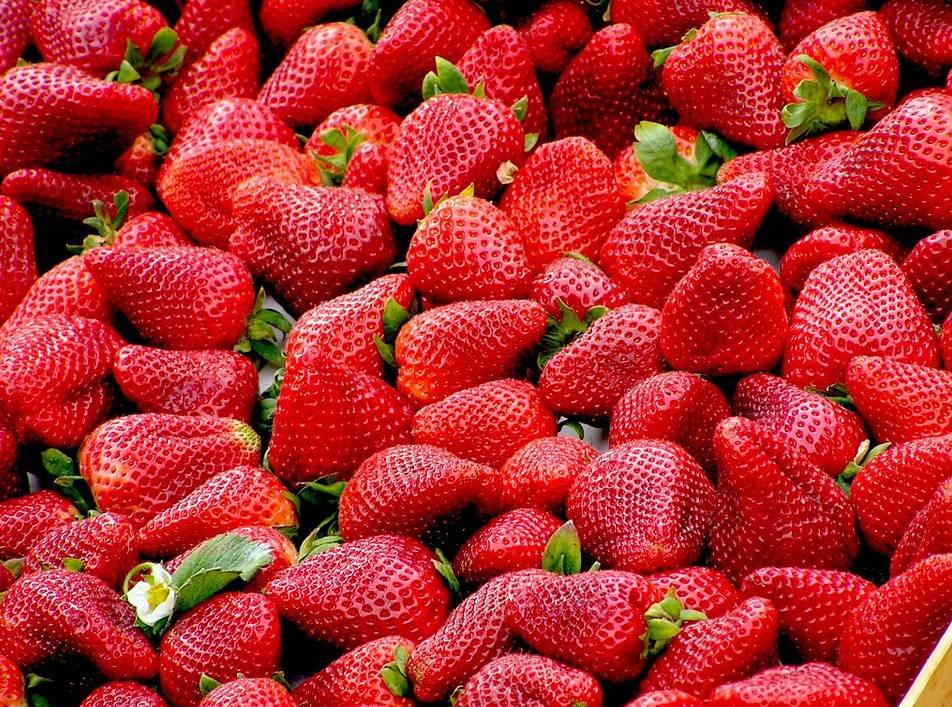sadzonki i owoce truskawek