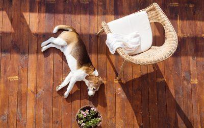 pies na drewnianym tarasie