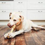 Psia dieta – czym nie powinno się karmić psa?